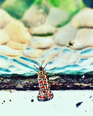 Moth Gala