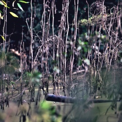 Swamp Magic I