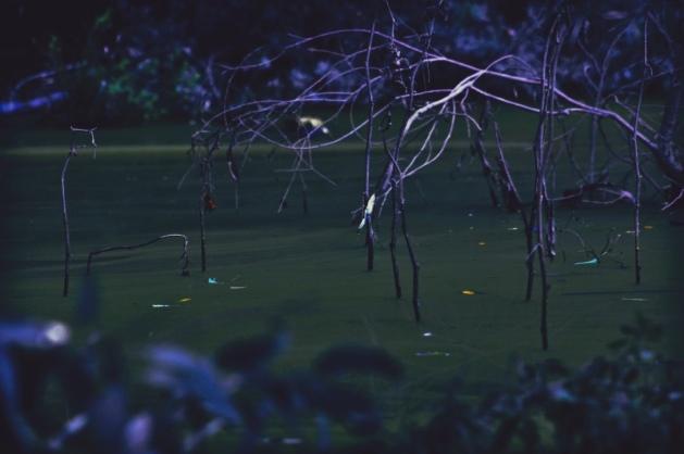 Swamp Magic II